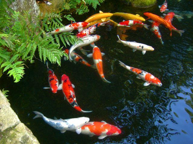 Jardines japoneses epoca momoyama y edo temprana for Arboles japoneses para jardin