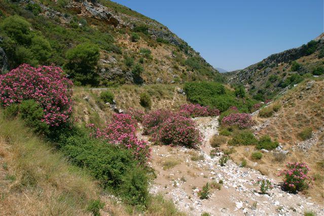 Erbil el jard n del ed n paisajistas marbella for Los jardines del eden
