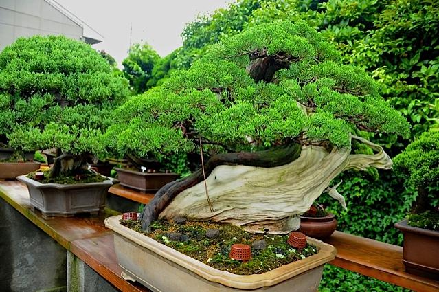 17 bonsais de kimura paisajistas marbella - Jardin de bonsais ...