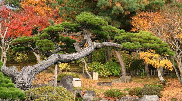 Jardines japoneses de palacios y templos en las pocas for Estanque japones