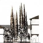 2-patio de Lindaraja alzado arquitecto francisco prieto moreno