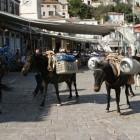 21- aún se usan los mulos para transportar mercancias a los pueblos del interior