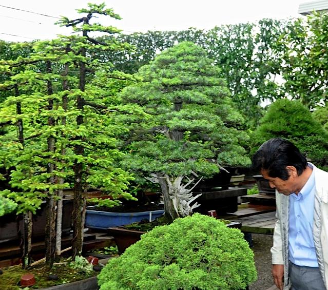 33 kimura con sus bonsais paisajistas marbella - Jardin de bonsais ...