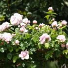 42-arco-rosado-huerta-monjas