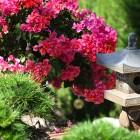 45-jardin-japones-huerta-monjas