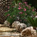 54-jardines-huerta-monjas