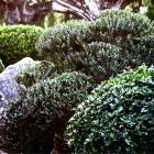 65-jardines-paisajismo-huerta-monjas