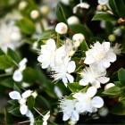 73-jardines-paisajista-huerta-monjas