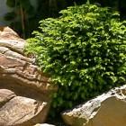 jardin-japones-mgarcia-095