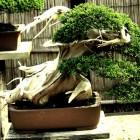 jardin_japones_kimura_004