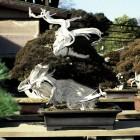 jardin_japones_kimura_005