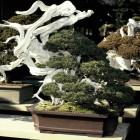 jardin_japones_kimura_007