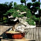 jardin_japones_kimura_008