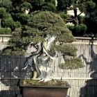 jardin_japones_kimura_009