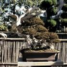 jardin_japones_kimura_011