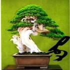 jardin_japones_kimura_023