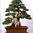 jardin_japones_kimura_024