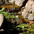 jardin_japones_mgarcia_48